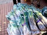 20091107_船橋市農水産祭_都市農業PR_1220_DSC05601