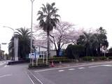 20090408_船橋市浜町2_ららぽーとTOKYO-BAY_桜_0844_DSC04003