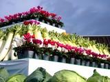 20091108_船橋市農水産祭_船橋中央卸売場_0931_DSC05808