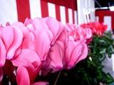 20091108_船橋市農水産祭_船橋中央卸売場_1016_DSC05933