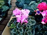 20091107_船橋市農水産祭_都市農業PR_1225_DSC05625
