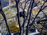 20101206_東京国際フォーラム_クリスマス_0834_DSC05675