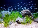 20100701_熱帯魚_水槽_飼育_010