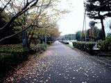 20101121_習志野市茜浜1_サクラ_桜_1001_DSC02747