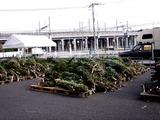 20101121_船橋市浜町_IKEA船橋_モミの木クリスマスツリー_0957_DSC02735