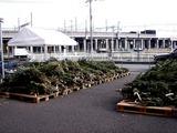 20101121_船橋市浜町_IKEA船橋_モミの木クリスマスツリー_0957_DSC02736