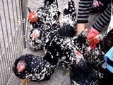 20101114_習志野市鷺沼2_第43回習志野市農業祭_1125_DSC01511