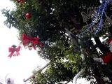 20101219_習志野市谷津_谷津遊路商店街_クリスマス_1404_DSC07582