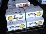 20100904_船橋市市場_中央卸売市場_ふなばし楽市_0912_DSC07438