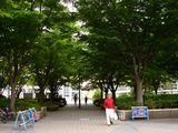 20100530_浦安市入船1_JR新浦安駅南口前広場_ケヤキ_1247_DSC01355