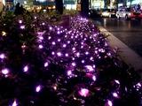 20101222_東京有楽町_クリスマス_イルミネーション_2058_DSC07808