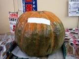 20101010_船橋市行田_JA行田_カボチャ_1420_DSC04730