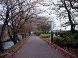 20101120_船橋市_海老川ジョギングロード_サクラ_1009_DSC02146