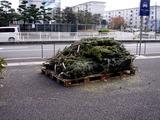 20101121_船橋市浜町_IKEA船橋_モミの木クリスマスツリー_0957_DSC02732
