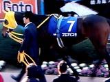 20101226_船橋市古作_中山競馬場_有馬記念_1452_DSC08148T