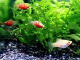 20100701_熱帯魚_水槽_飼育_020