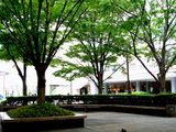 20100530_浦安市入船1_JR新浦安駅南口前広場_ケヤキ_1228_DSC01309