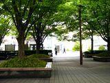 20100530_浦安市入船1_JR新浦安駅南口前広場_ケヤキ_1248_DSC01360