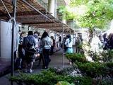 20101023_市川市二俣_東京経営短期大学_秋桜祭_1217_DSC07151