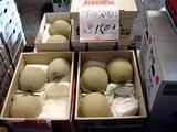20100904_船橋市市場_中央卸売市場_ふなばし楽市_0914_DSC07446