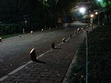 20101120_千葉市稲毛_第5回夜灯_よとぼし_公園_1736_DSC02647