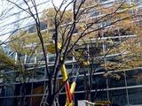 20101206_東京国際フォーラム_クリスマス_0834_DSC05667