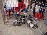20101114_習志野市鷺沼2_第43回習志野市農業祭_1047_DSC01463