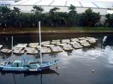 20101031_市川市二俣_ハヤシ艇船_貸しボート_ハゼ釣り_0936_DSC08446