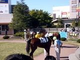 20101103_船橋市若松1_船橋競馬場_船橋JBC祭り_1001_DSC09134