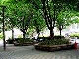 20100530_浦安市入船1_JR新浦安駅南口前広場_ケヤキ_1248_DSC01361
