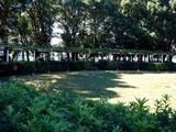 20101011_船橋市行田_千葉県立行田公園フェスタ_1145_DSC05210
