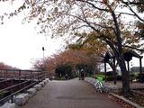 20101120_船橋市_海老川ジョギングロード_サクラ_1008_DSC02144
