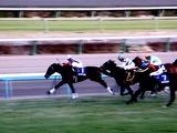 20101226_船橋市古作_中山競馬場_有馬記念_1529_DSC08239