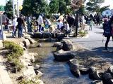 20101106_市川市大洲防災公園_いちかわ市民まつり_1119_DSC00432
