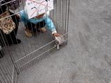 20101114_習志野市鷺沼2_第43回習志野市農業祭_1046_DSC01459