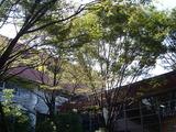 20101023_市川市二俣_東京経営短期大学_秋桜祭_1120_DSC07128