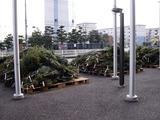 20101121_船橋市浜町_IKEA船橋_モミの木クリスマスツリー_0957_DSC02730
