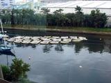 20101031_市川市二俣_ハヤシ艇船_貸しボート_ハゼ釣り_0936_DSC08447