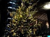 20101210_東京国際フォーラム_クリスマス_2129_DSC06112