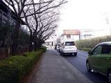 20110410_船橋市浜町2_三井ガーデンホテル_サクラ_1548_DSC07696