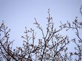 20110102_船橋市若松1_船橋競馬場_桜_1635_DSC00306
