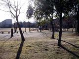 20110109_習志野市袖ヶ浦3_西近郊公園_どんど焼き_0911_DSC00439