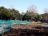 20110313_東日本大震災_海浜香澄公園_菖蒲園_1203_DSC09702