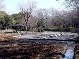 20110313_東日本大震災_海浜香澄公園_菖蒲園_1203_DSC09703T