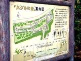 20110504_船橋市運動公園_ホタルの里_ホタル鑑賞会_1418_DSC00548