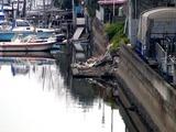 20110402_東日本大震災_船橋市西浦2_堤防破壊_1010_DSC00019
