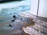 20110311_東日本巨大地震_海浜幕張_液状化_幕張メッセ_255987750T