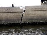 20110326_東日本大震災_船橋市栄町2_堤防破壊_1603_DSC08926T