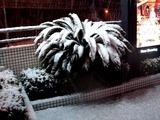 20110214_ららぽーとTOKYO-BAY_大雪_2233_DSC06337