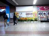 20110319_JR京葉線_JR南船橋_ナノハナ_菜の花_1506_DSC08008